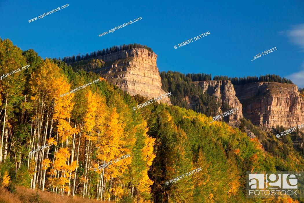 Stock Photo: Aspen color in autumn.
