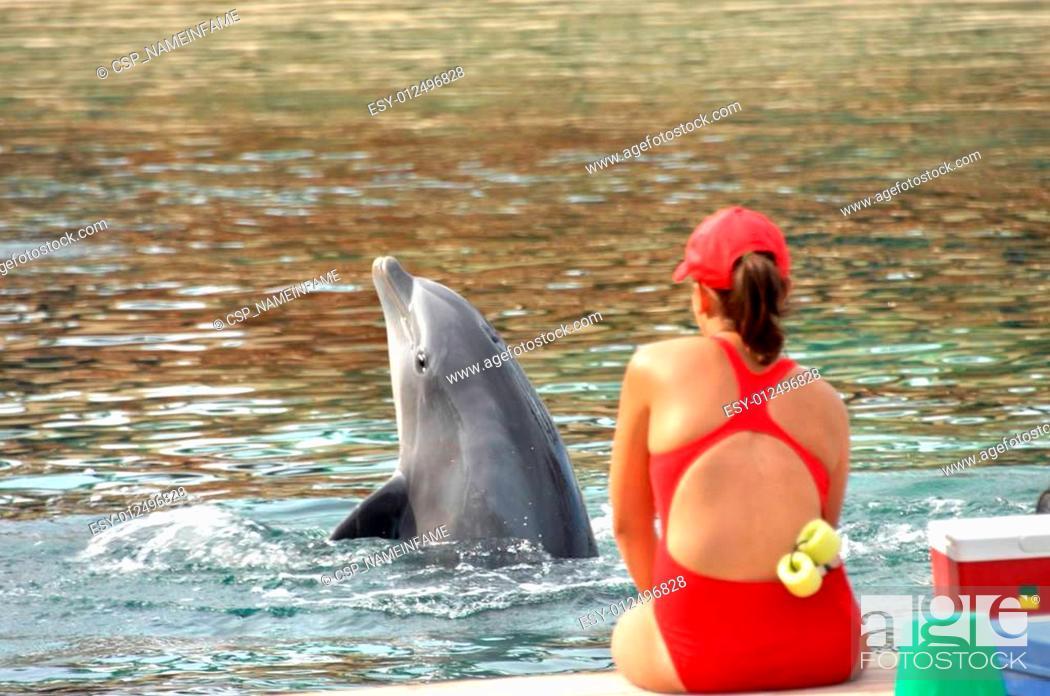 Stock Photo: Dolphin in Training.