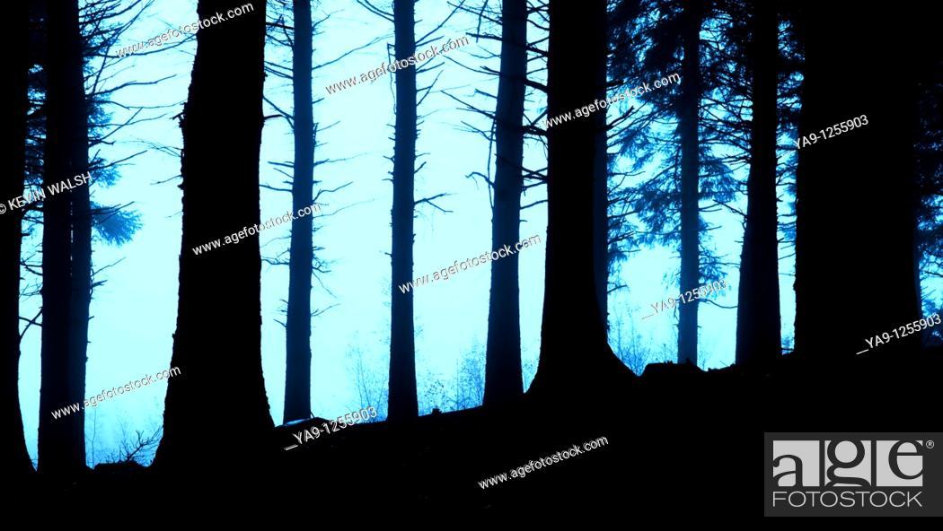 Stock Photo: Woods on Beacon Fell in Bowland, Lancashire, England, UK.