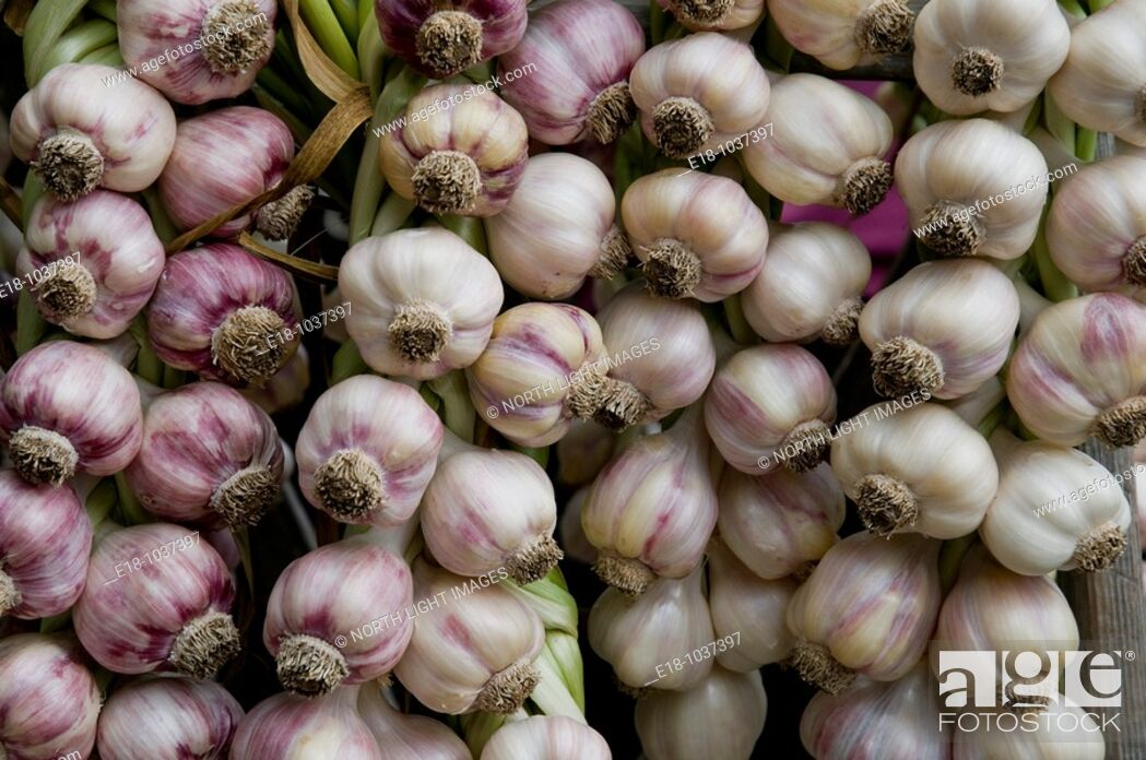 Stock Photo: Canada, BC, Saltspring Island  Ganges Saturday market, Garlic braids.