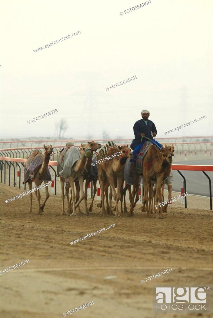 Stock Photo: camels, race, tradition, sport, running, arabic.