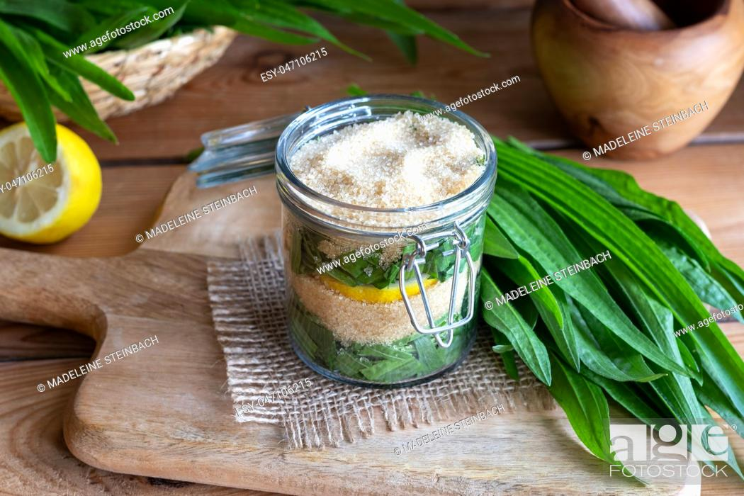 Imagen: A jar filled with ribwort plantain leaves, lemon and cane sugar, to prepare herbal syrup against cough.