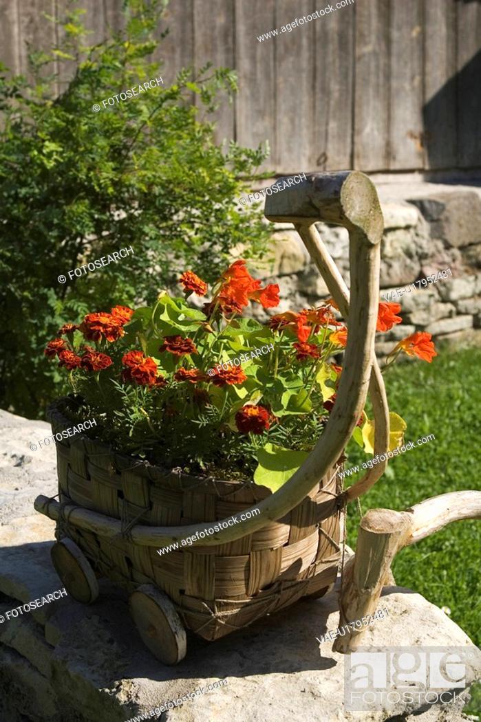 Stock Photo: Basket, Cart, Close-Up, Flora, Flower.