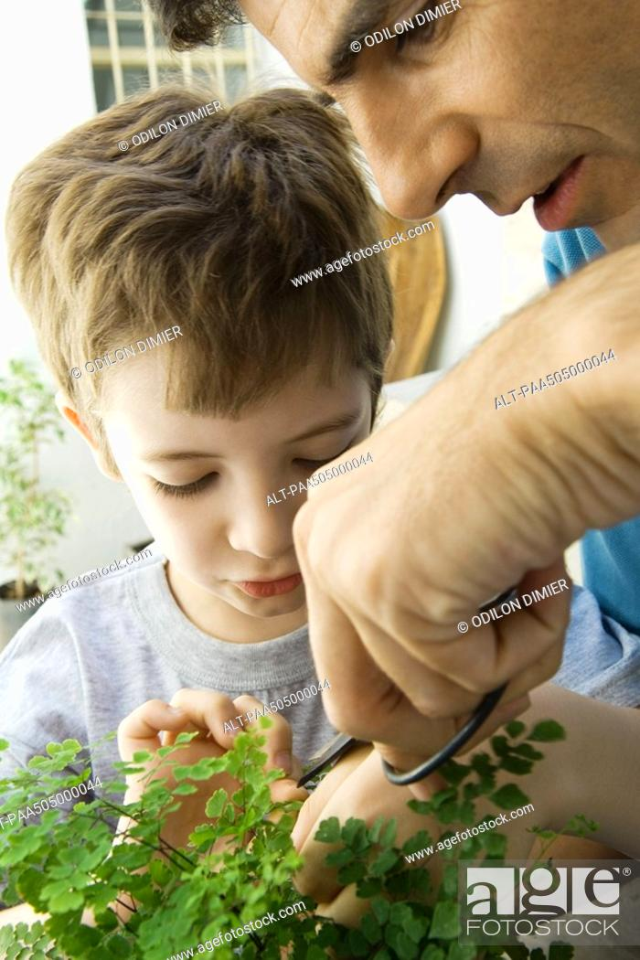 Stock Photo: Father and son pruning plant together.