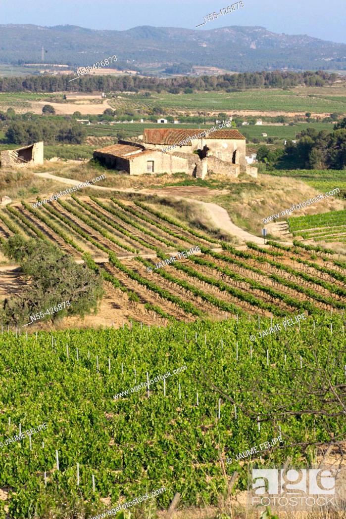 Stock Photo: Vineyards and 'masia' (typical farmhouse) in La Múnia, Alt Penedès. Barcelona province, Catalonia. Spain.