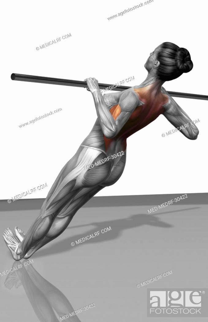 Stock Photo: Body row exercise.