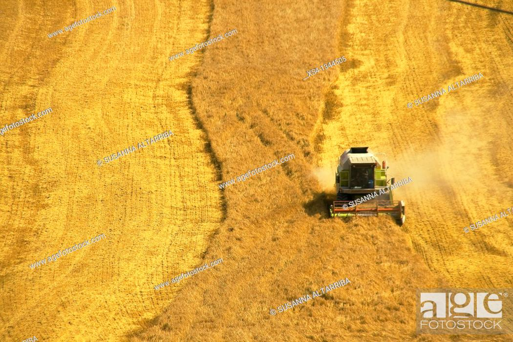 Stock Photo: Harvest of corn at view of eagle, photo taken in Solsonès, Lleida, Spain, Europe.
