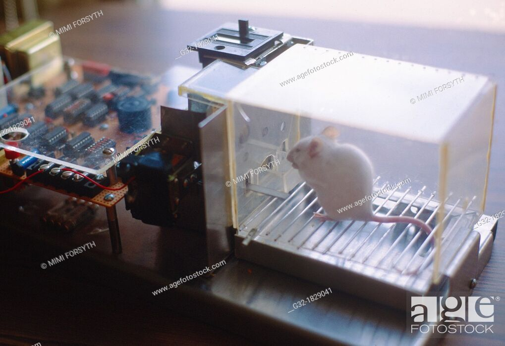 Stock Photo: Mouse in Skinner box, behavior experiment- mouse presses bar for food.