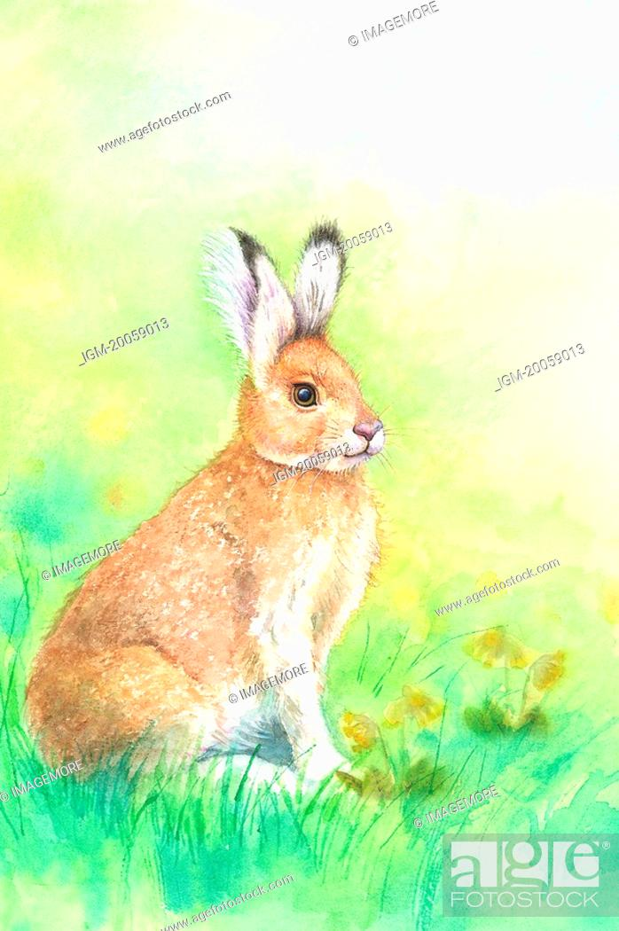 Stock Photo: Animal, Watercolor painting of a rabbit crouching on the lawn.