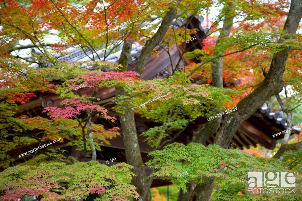 Stock Photo: Autumn colours in garden of Kinkakuji, Kyoto, Japan.