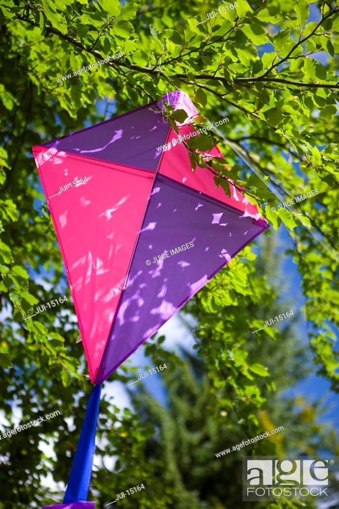 Stock Photo: Kite in tree.