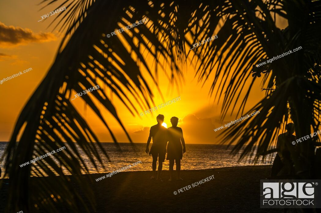 Stock Photo: Sonnenuntergang am Strand unter Palmen am Meer, Guadeloupe, Frankreich | sunset under palm trees at he beach in Guadeloupe, France.