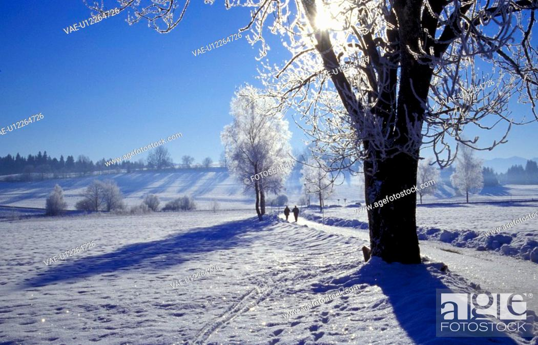 Stock Photo: cold, day, frost, hoarfrost, idyllic, landscape.