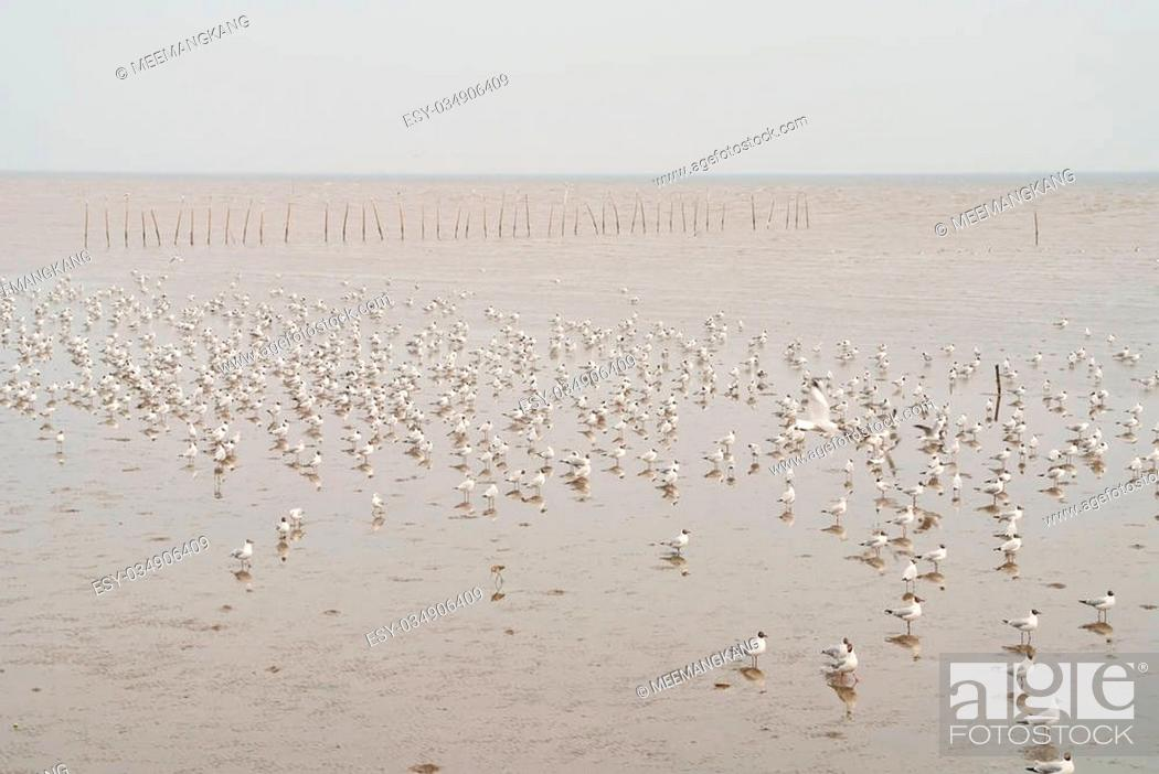 Stock Photo: A flock of seagulls on the beach in the evening.