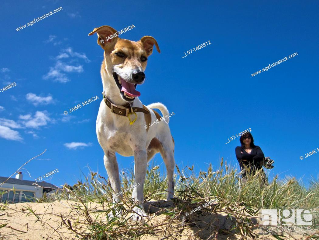 Stock Photo: Small dog on beach with owner in the background.