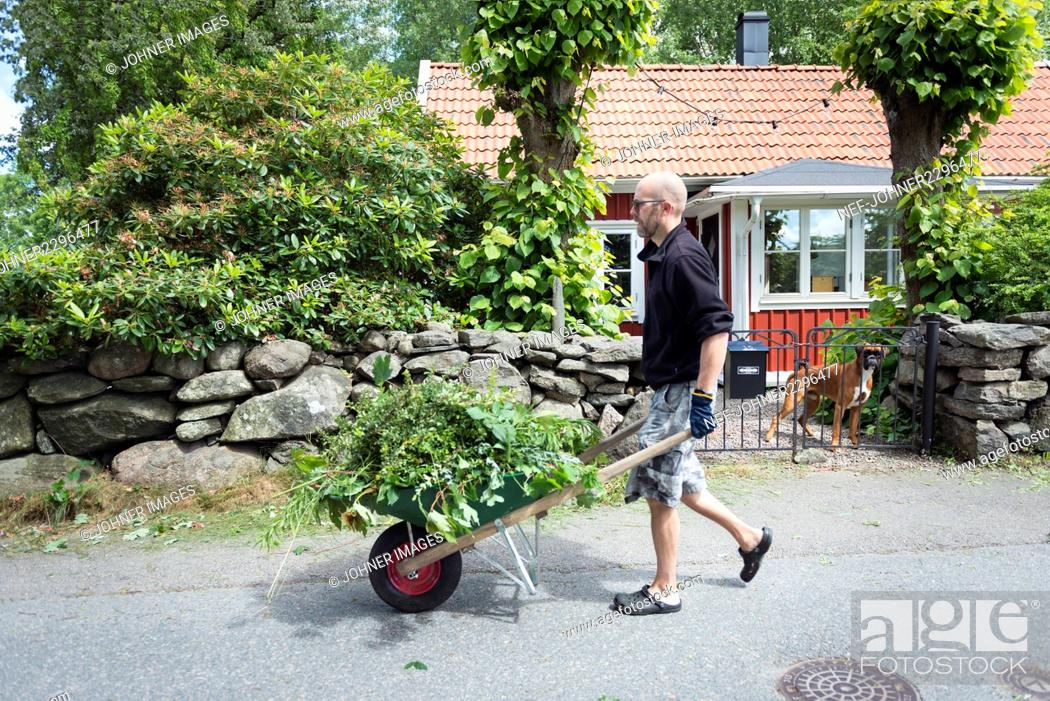 Stock Photo: Man carrying plants in wheelbarrow in garden.
