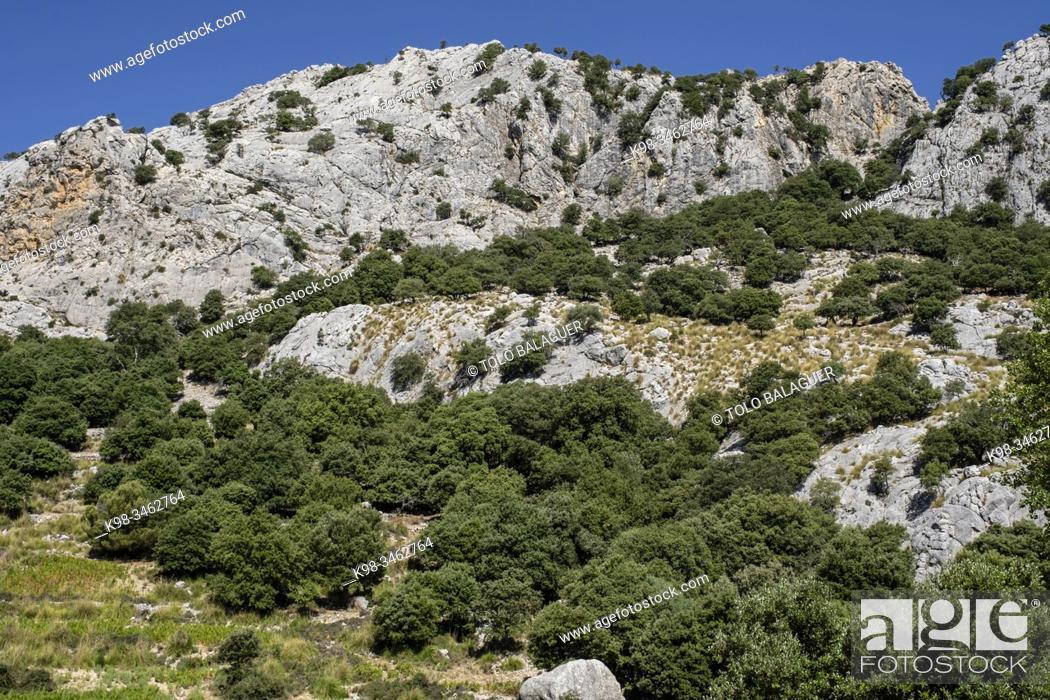 Stock Photo: serra de Cuber, Mallorca, Balearic Islands, Spain.