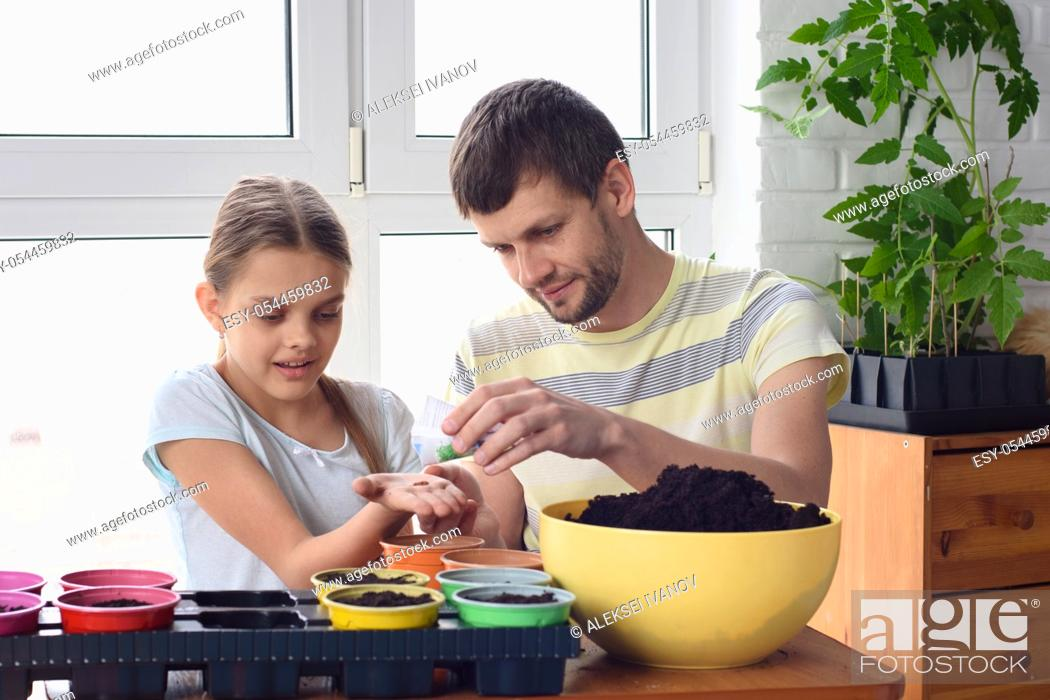 Stock Photo: Dad and daughter plant seeds in pots in spring.