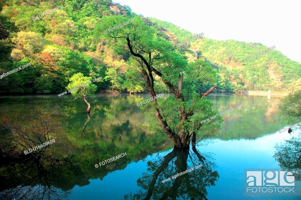 Stock Photo: river, scenery, tree, mountain, landscape, lake, nature.