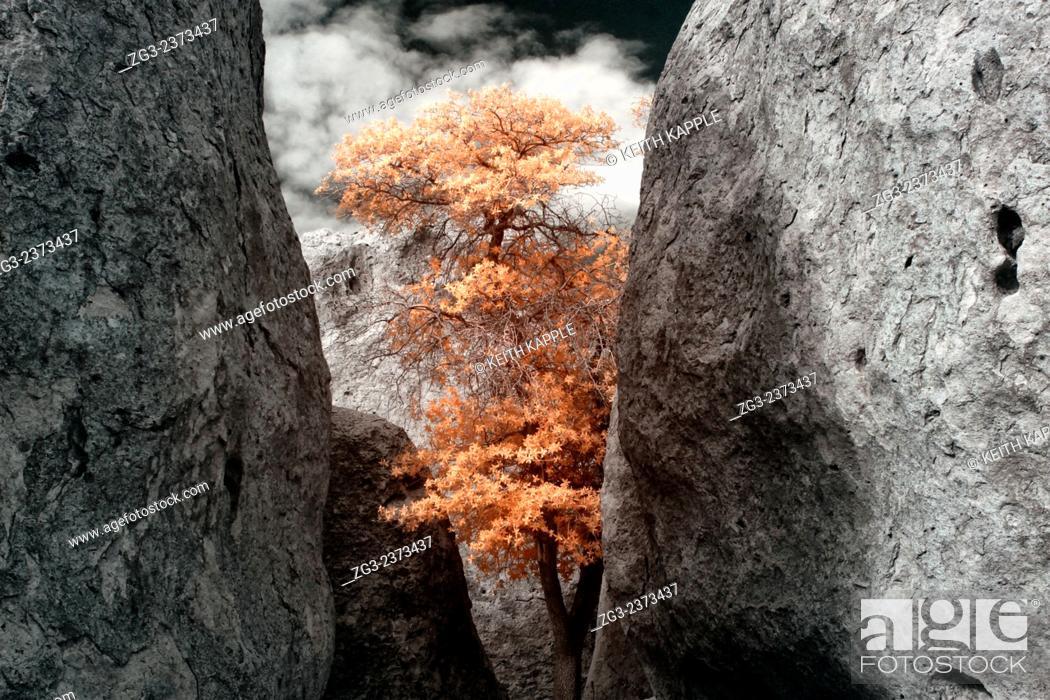 Stock Photo: City of Rocks New Mexico.