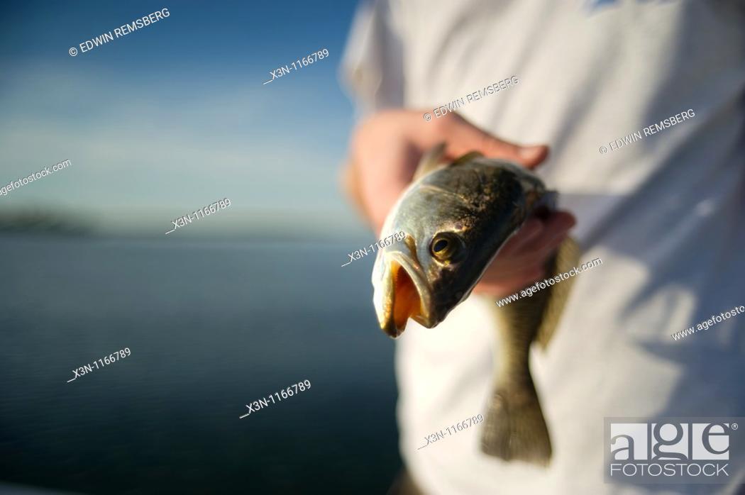 Stock Photo: Teenager holding sea trout, Pine Island Florida.