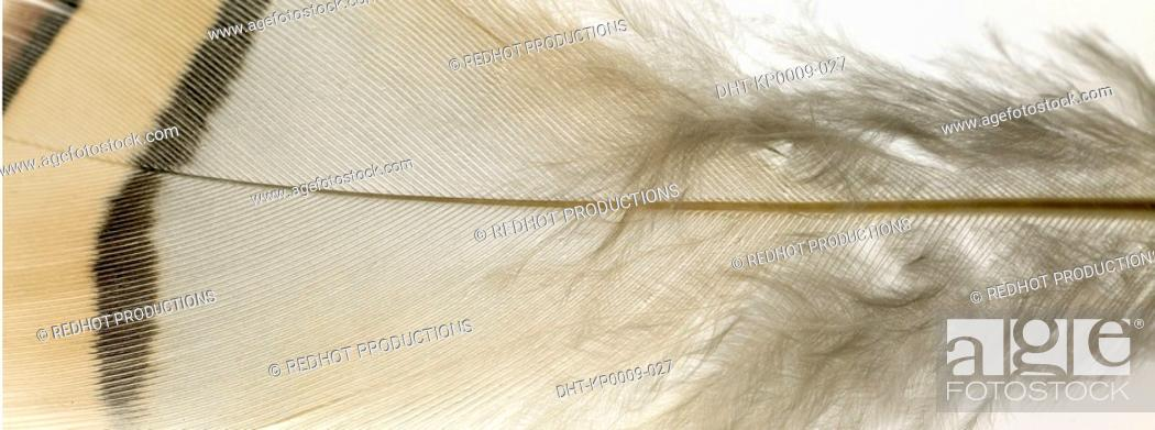 Stock Photo: White and brown Feather close up.