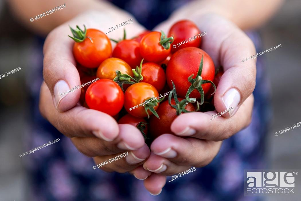 Stock Photo: Homegrown cherry tomatoes.