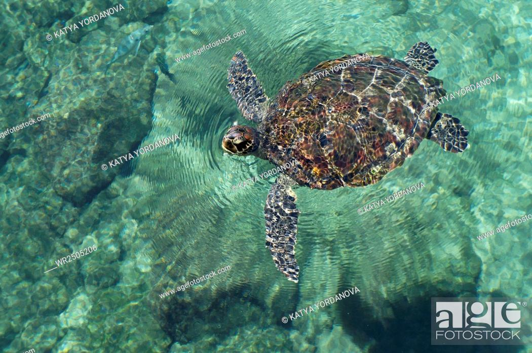 Stock Photo: A Mexican Turtle.