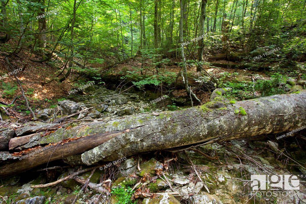 Stock Photo: Wildnisgebiet DÆ'rrenstein, Ybbstal Alps, Lower Austria, NiederÃœsterreich, Austria, Europe.