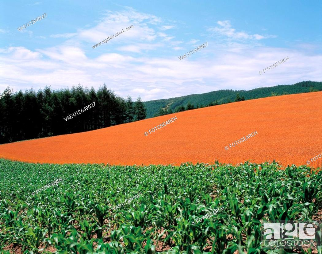 Stock Photo: nature, scenery, hill, mountain, landscape, field.