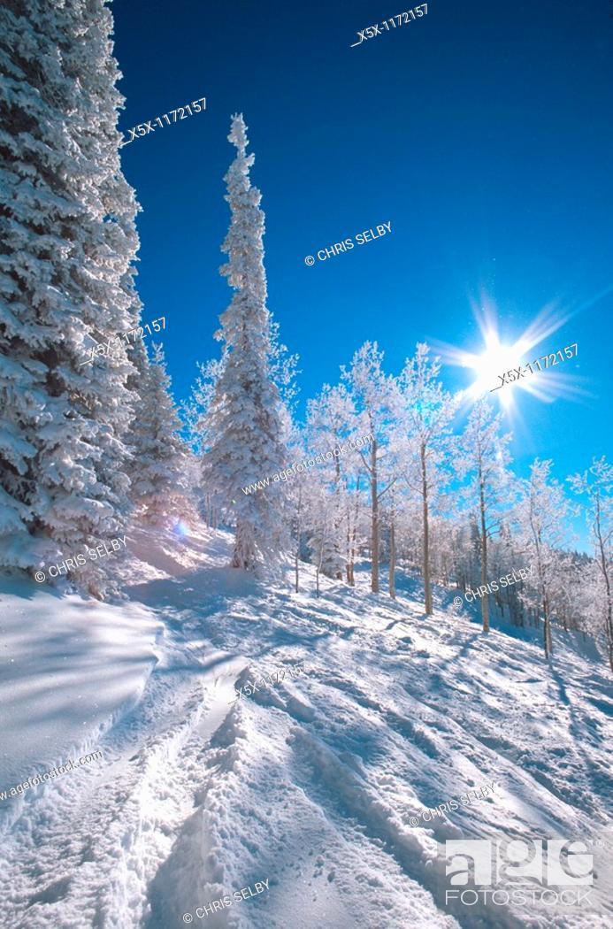 Stock Photo: Powder skiing at Steamboat Colorado USA.