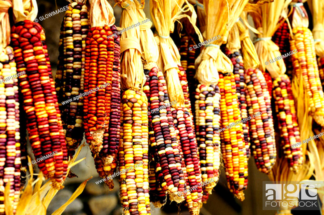 Stock Photo: Closeup of colorful Indian corn in shop in Cherokee, North Carolina.