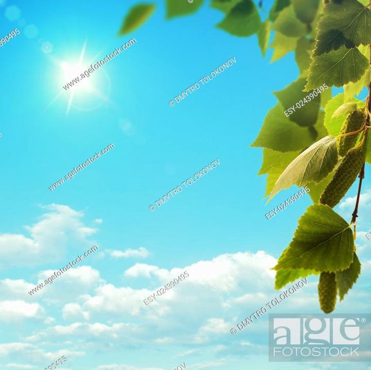 Stock Photo: Birch tree under bright summer sun, seasonal background.