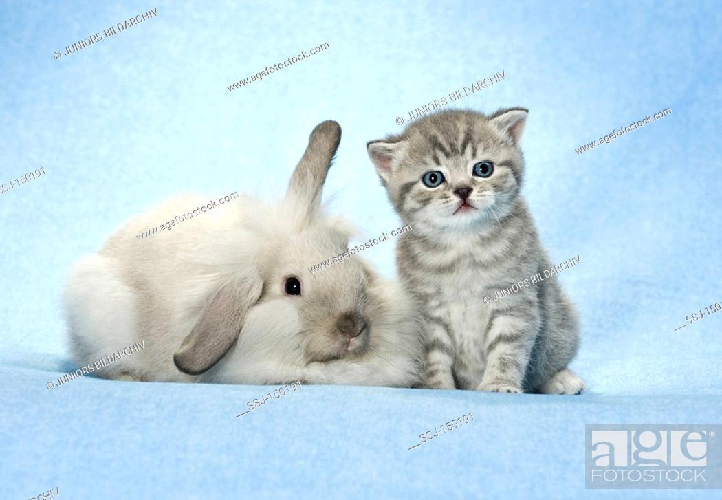 Stock Photo: animal friendship : dwarf rabbit and kitten restrictions: Tierratgeber-Bücher, Kalender / animal guidebooks, calendars.