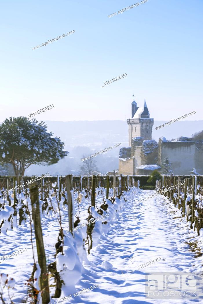 Stock Photo: Vineyard and the Clock Tower of the Royal Fortress of Chinon in Winter. Indre-et-Loire, Central Region, Loire Valley, France, Europe.