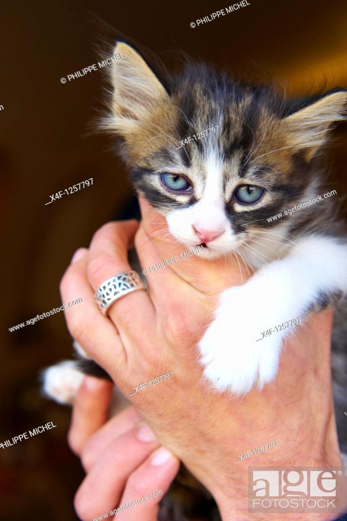 Stock Photo: Morocco, Medina of Essaouira, Atlantic coast, Unesco world heritage, street cat.