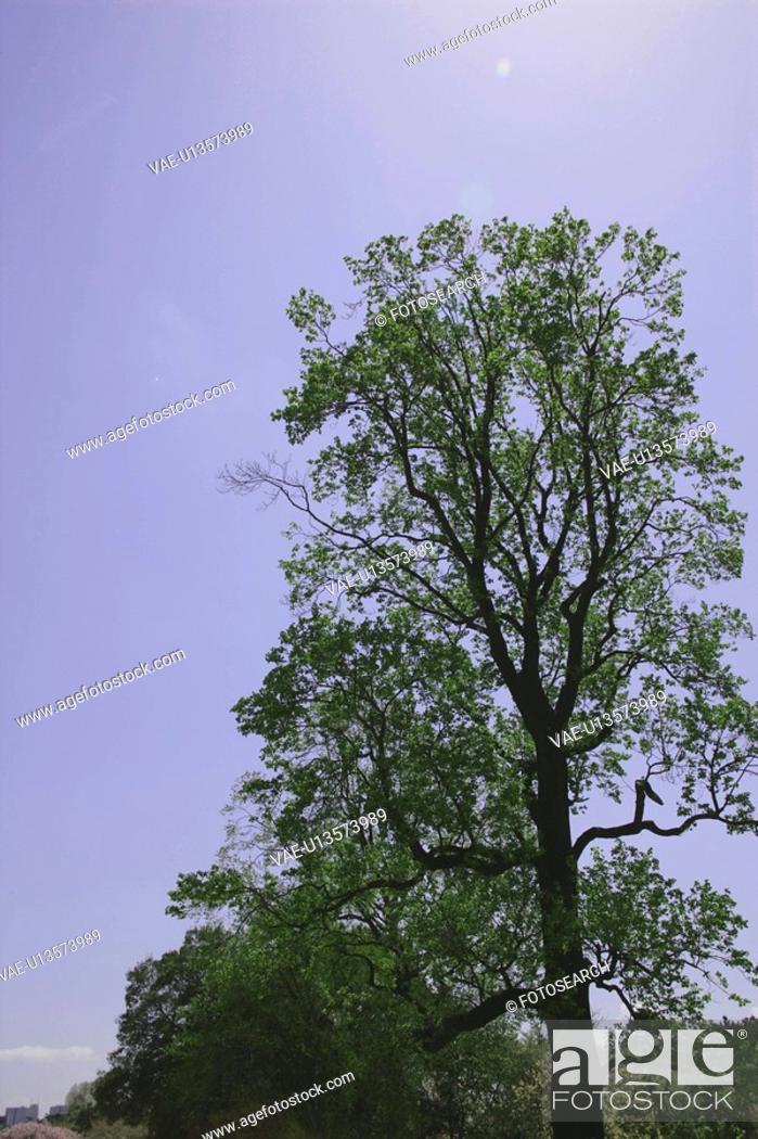 Stock Photo: Trees.
