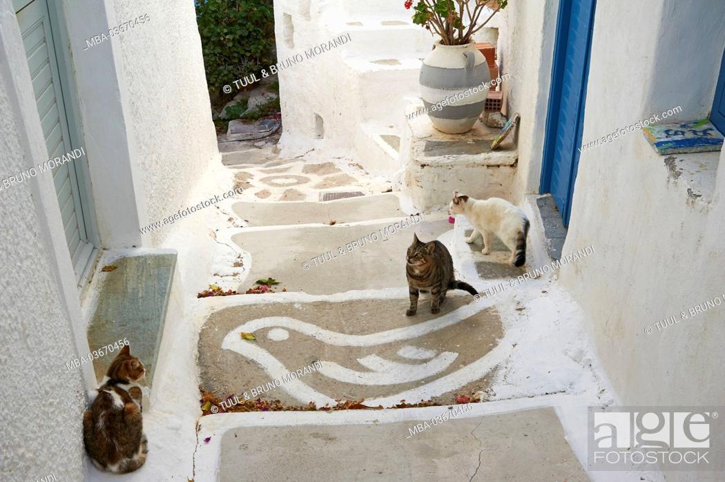 Stock Photo: Three cats, Serifos, Greece, Europe,.