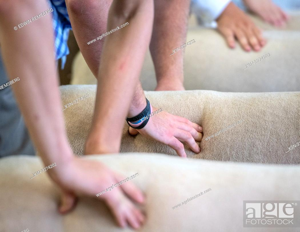 Imagen: Hands presses into sheep's side during sheep judging, Timonium, Maryland.