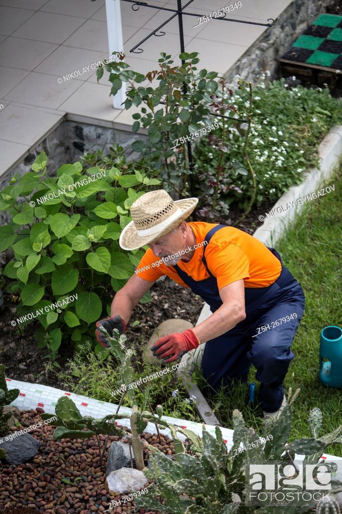 Stock Photo: Russia. Belgorod region. Elderly man working in the garden. Flower Care.