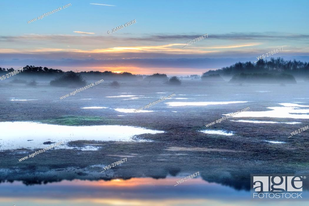Stock Photo: Ocknell, New Forest, Lyndhurst, Hampshire, England, UK.