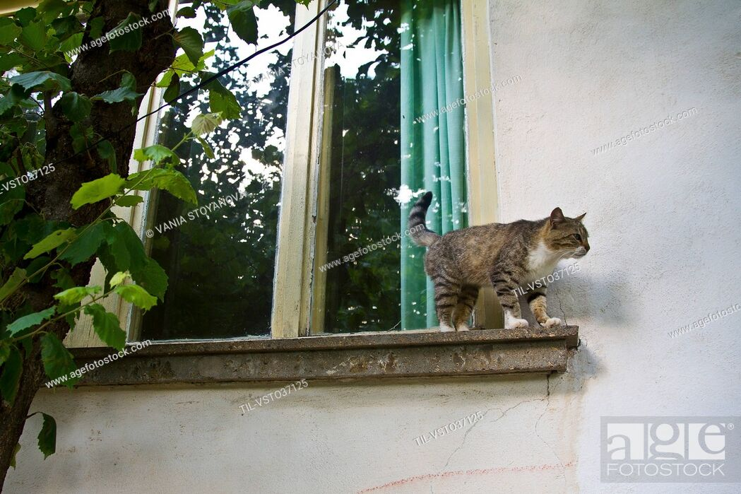 Stock Photo: Cat on a ledge looking down toward the ground.