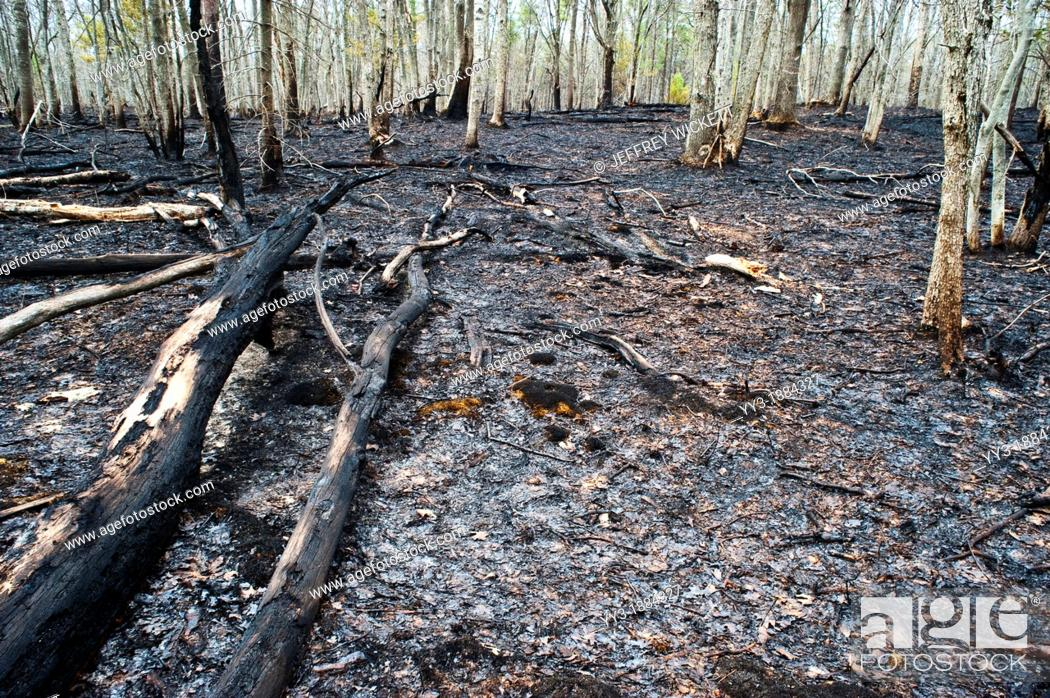 Stock Photo: Two days after 2000 acre controlled burn in Michigan.