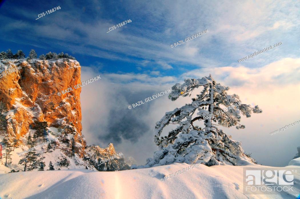 Stock Photo: Crimea  Ukraine Wood  Ai-petri.