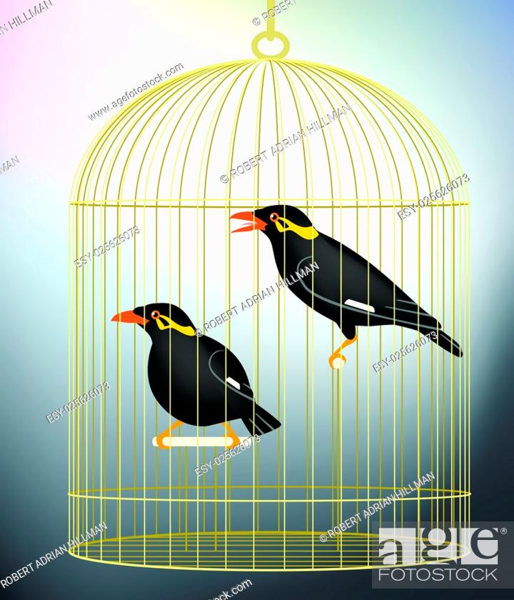 Stock Vector: Editable vector illustration of a pair of caged hill myna birds made with gradient meshes.