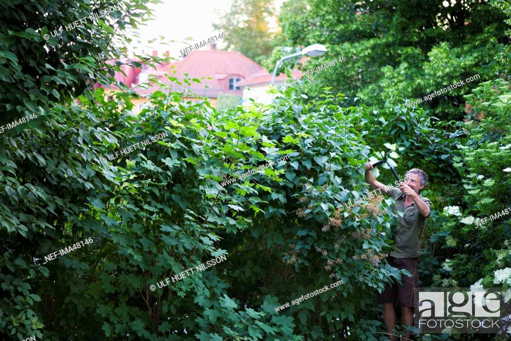 Stock Photo: A man working in the garden, Sweden.