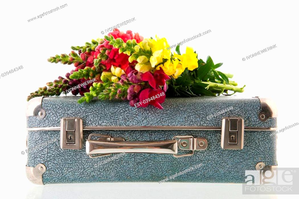 Stock Photo: Bouquet dragon flowers on vintage suitcase isolated over white background.