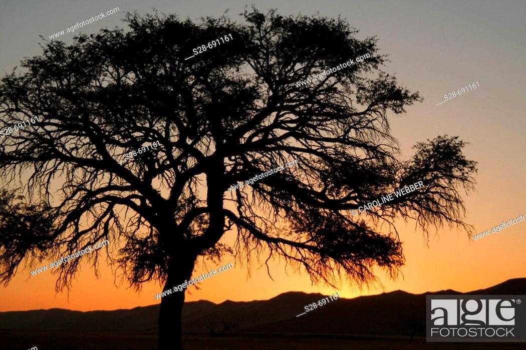 Stock Photo: Sunset in Namibian desert.