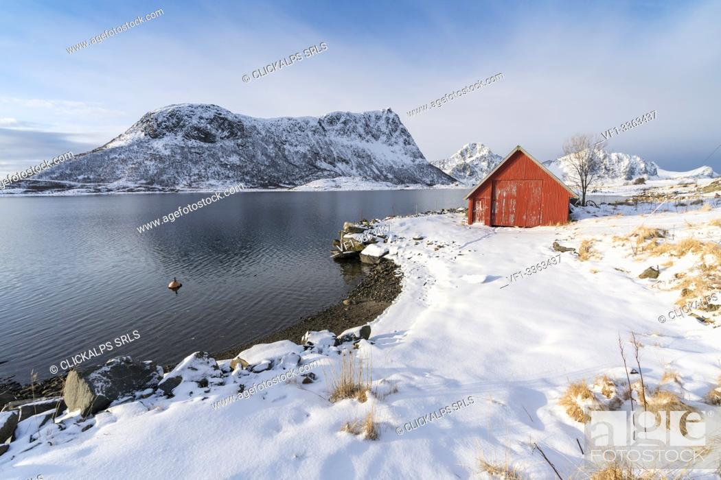 Stock Photo: Red cabin in the snow with mountains in the background. Vestpollen, Leknes, Nordland county, Northern Norway, Norway.