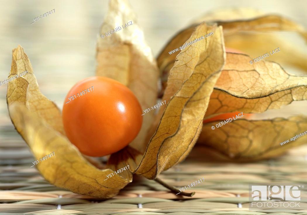 Stock Photo: Chinese Lantern Fruit, physalis alkekenge.